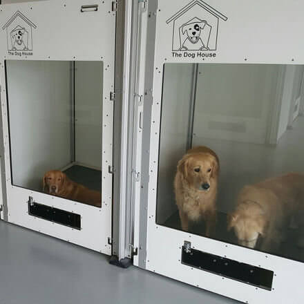 Dogs in dog kennel